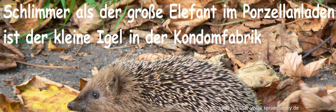 Witzige Verse Geburtstag Spruch Lustig Texte